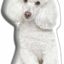 Adorable Cushions White Poodle Shaped Cushion